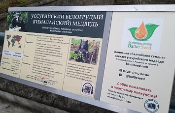 LLC Baltic Seeds became the guardian of an Ussuri bear ,who lives in the Kaliningrad Zoo.