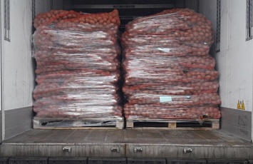 Baltic Seeds LLC started the dispatch of seed potatoes.